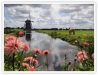 Historic windmill with flowers in foreground